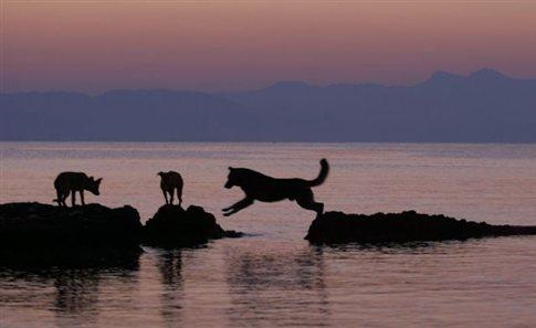 Perierga.gr - Αδέσποτοι σκύλοι έσωσαν τουρίστα από πνιγμό!