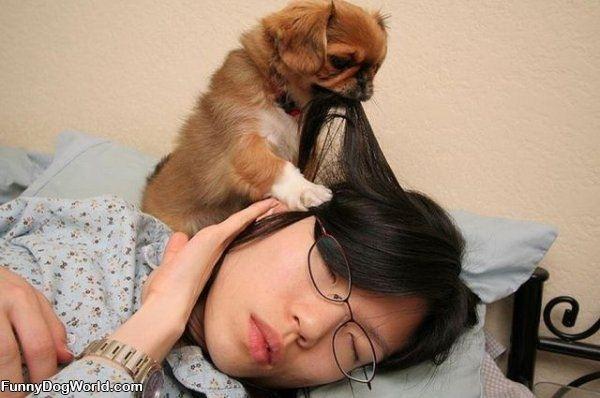 perierga.gr - Γιατί έχει πλάκα να έχεις σκύλο;