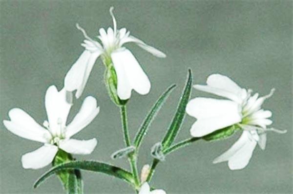 perierga.gr - Αναστήθηκε φυτό από καρπούς 30.000 ετών!