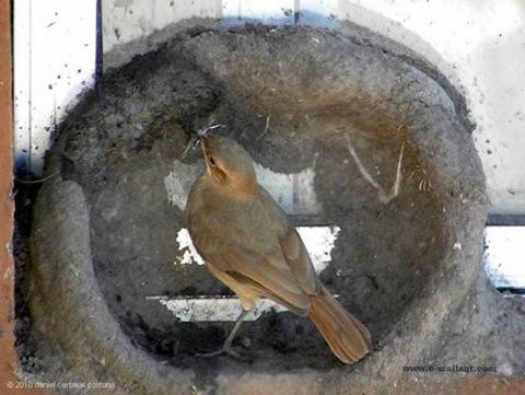 perierga.gr - Έχετε δει πουλί να φτιάχνει τη φωλιά του;