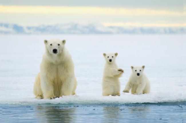 perierga.gr - Ψάχνουν άνθρωπο για να τρομάζει τις αρκούδες!