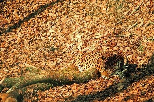 perierga.gr - 10 απίθανα ζώα που ξέρουν καλά από... καμουφλάζ!