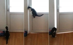 perierga.gr - Απίθανη γάτα ανοίγει 5 πόρτες... προς την ελευθερία!
