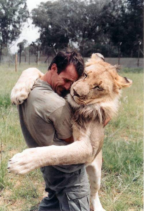 perierga.gr - Ζει ανάμεσα στα λιοντάρια και το απολαμβάνει!