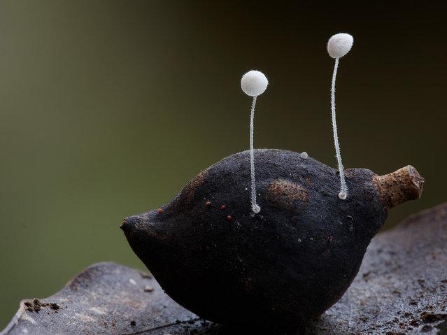 perierga.gr - Απίθανα είδη μανιταριών... ποζάρουν στο φακό!