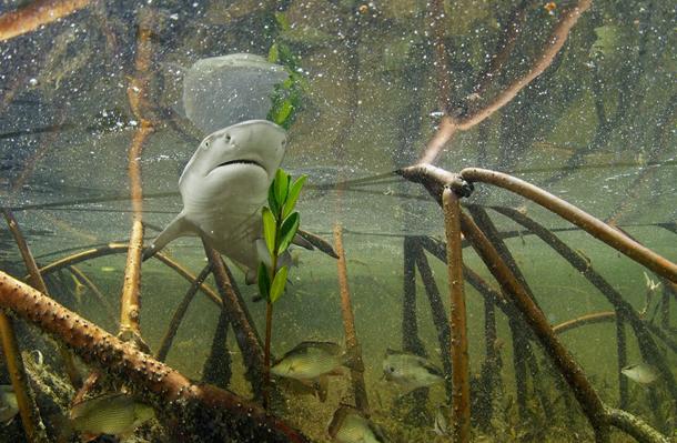 perierga.gr - Εκπληκτικές υποβρύχιες εικόνες!