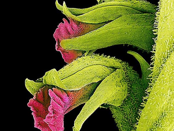 perierga.gr - Η αόρατη ομορφιά των λουλουδιών!