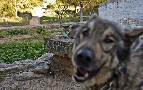 perierga.gr - Και τα ζώα κάνουν... photobombing!
