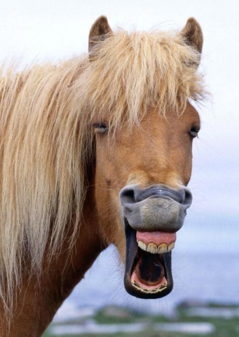 perierga.gr - Χαρούμενα ζώα που δεν παίρνουν τη ζωή στα σοβαρά!
