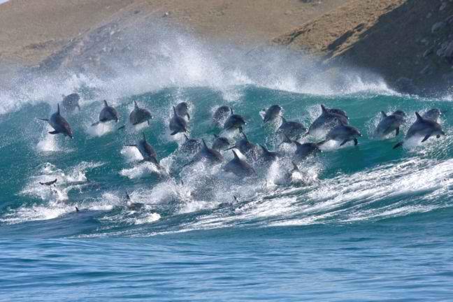 Perierga.gr - Σμήνος δελφινιών σε εντυπωσιακά στιγμιότυπα!