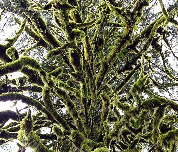 perierga.gr - Φωτογραφίζοντας τα δέντρα από πολύ κοντά!