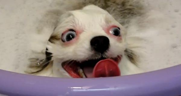 perierga.gr - Σκυλιά που μισούν το μπάνιο!