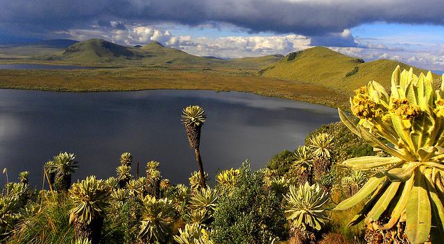 perierga.gr - El Angel Ecological Reserve: Το οικολογικό πάρκο του Εκουαδόρ!