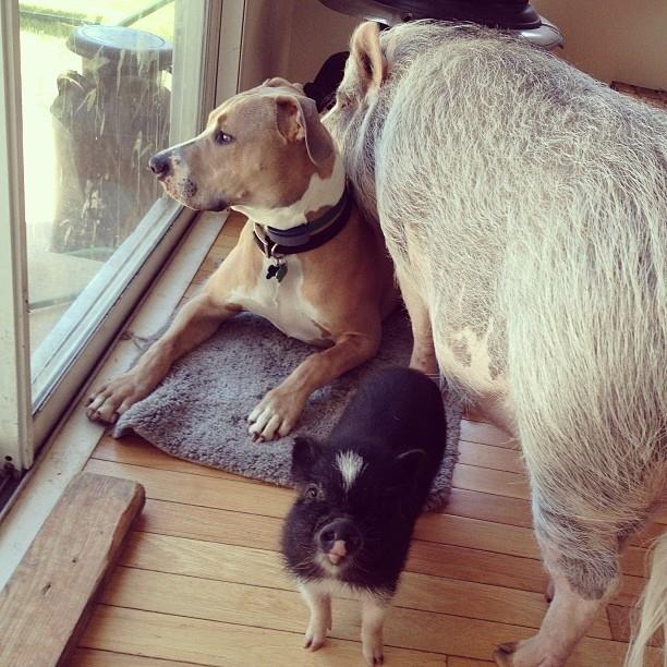 perierga.gr - Η πιο αξιολάτρευτη οικογένεια ζώων!