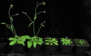 perierga.gr - Οι μαθηματικές ασκήσεις είναι πράγματι για τα φυτά!