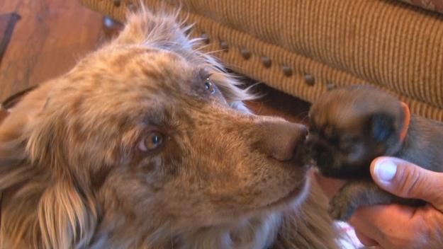 perierga.gr - Σκυλίτσα έσωσε κουτάβια από τα σκουπίδια και τα υιοθέτησε!
