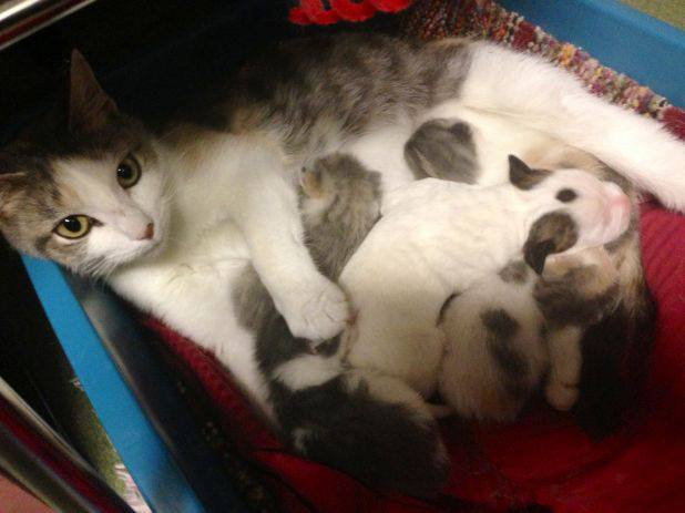 perierga.gr - Μια μεγάλη... γατίσια αγκαλιά για ένα ορφανό κουτάβι!