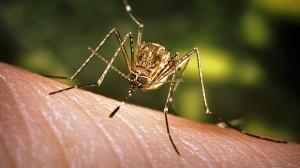 perierga.gr - Γιατί κάποιους τους τσιμπούν τα κουνούπια και άλλους όχι!