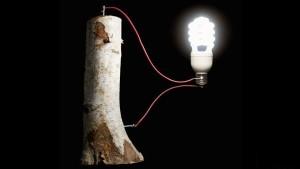 perierga.gr - Μπαταρία από ξύλο αποθηκεύει μεγάλες ποσότητες ενέργειας!