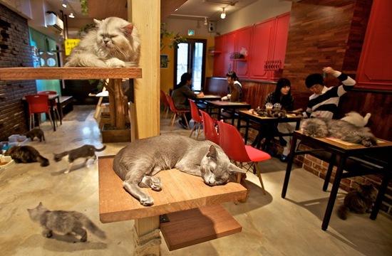 perierga.gr - 15 παράξενα cafes με γάτες!
