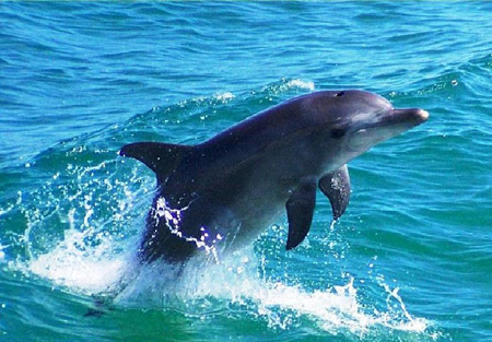 Perierga.gr - Τα δελφίνια έχουν ονόματα!