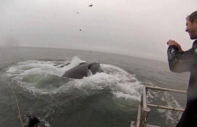 Perierga.gr - Φάλαινες βγαίνουν στην επιφάνεια δίπλα από δύτες