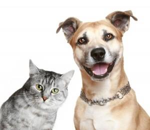 Πώς αντιδρούν σκύλος και  γάτα στην επιστροφή του ιδιοκτήτη τους! (βίντεο)