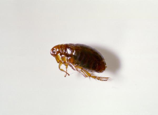 perierga.gr - 10 έντομα με υπερφυσικές ικανότητες!
