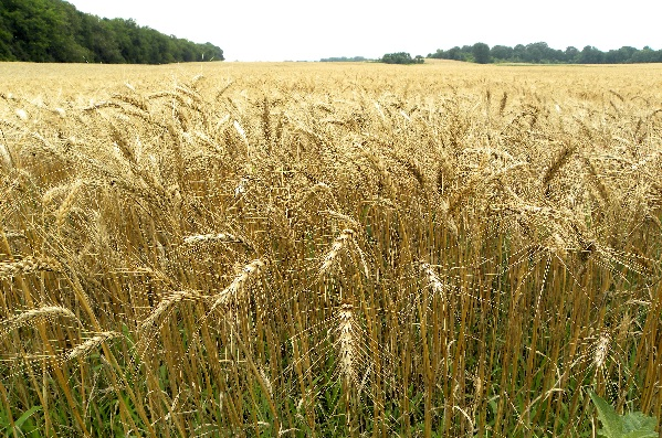 Perierga.gr - Τουλάχιστον δύο φορές εφευρέθηκε η γεωργία!