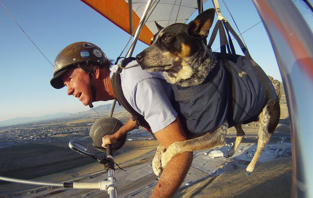 perierga.gr - Απίθανος σκύλος... αιωροπτεριστής!