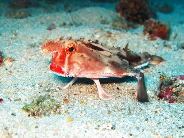 perierga.gr - Το ψάρι με τα κόκκινα χείλη!