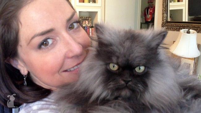 Perierga.gr - Συνταγματάρχης Nιάου, ο πιο μαλλιαρός γάτος