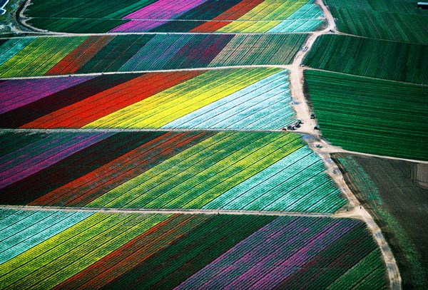 perierga.gr - Καλλιέργειες φυτών στον κόσμο!