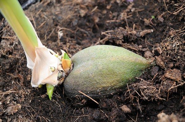 perierga.gr - Φυτά που καθυστερούν (πάρα) πολύ να ανθίσουν!
