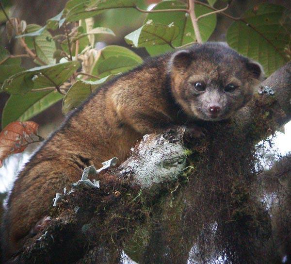 perierga.gr - Επιστήμονες ανακάλυψαν άγνωστο θηλαστικό