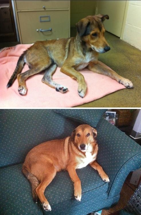 perierga.gr - Συγκινητικές φωτογραφίες σκύλων πριν και μετά την υιοθεσία!