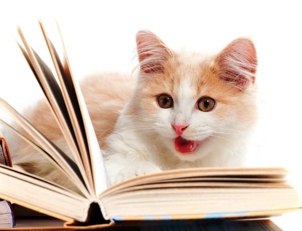 perierga.gr - Αναγνώστες βιβλίων μέσα από τα μάτια των ζώων!