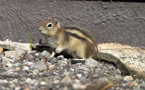 perierga.gr - 10 αξιολάτρευτα ζώα που δεν ξέρετε ότι κανιβαλίζουν!