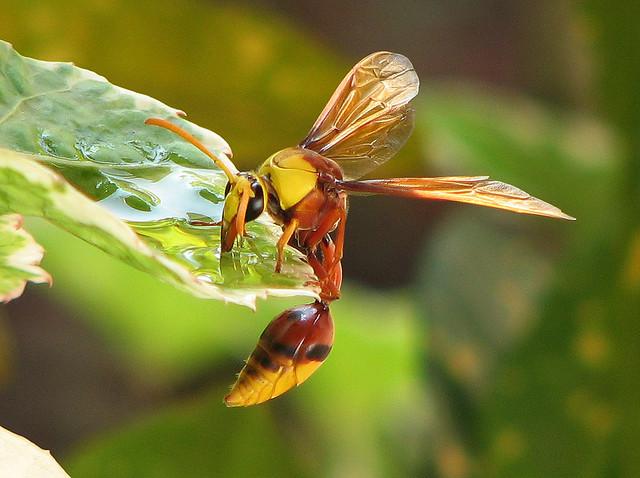 perierga.gr - Όταν τα έντομα διψάνε...