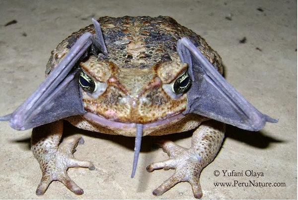 perierga.gr - Απίστευτο! Τι έχει ο βάτραχος στο στόμα του;