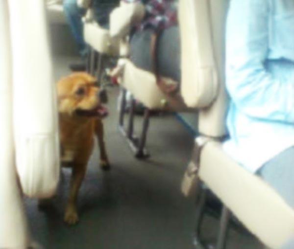 perierga.gr - Απελπισμένος σκύλος ψάχνει τον ιδιοκτήτη του στο λεωφορείο!