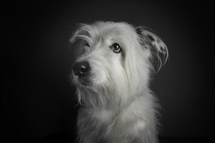 perierga.gr - Πορτρέτα σκύλων με... ανθρώπινες εκφράσεις!