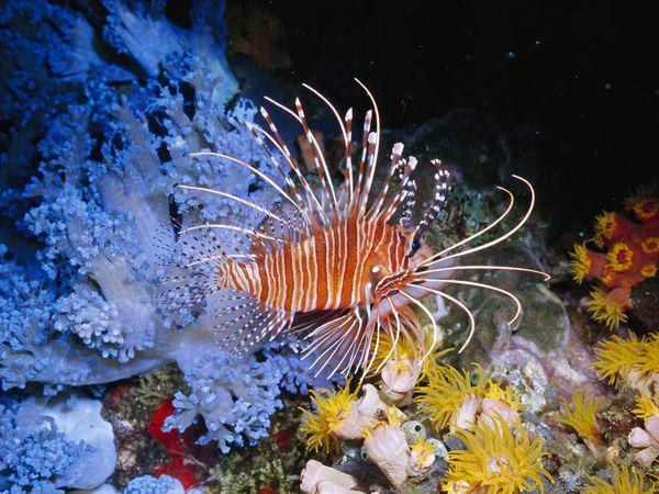 perierga.gr - 10 θαλάσσια είδη που μοιάζουν... εξωγήινα!