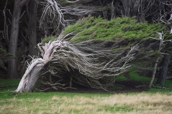 perierga.gr - Τα ανεμοδαρμένα δέντρα της Νέας Ζηλανδίας!