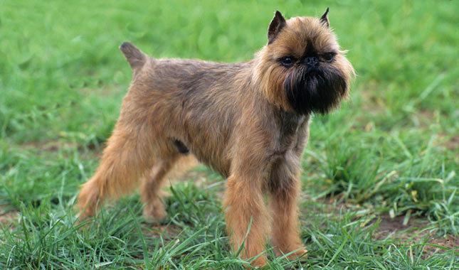 perierga.gr - Τα 10 μικρότερα σκυλιά στον κόσμο!
