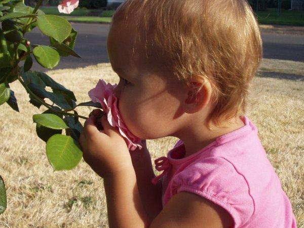perierga.gr - Οι 20 πιο αναγνωρίσιμες μυρωδιές!