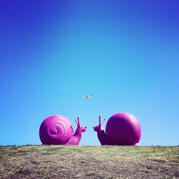 perierga.gr - Το Σίδνεϊ γέμισε γιγάντια… σαλιγκάρια!