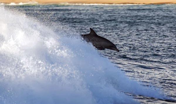 perierga.gr - Σέρφινγκ μαζί με… δελφίνια!