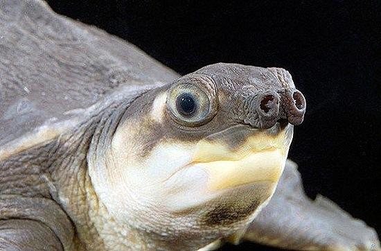 perierga.gr - Παράξενες χελώνες στον κόσμο!