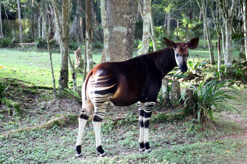 perierga.gr - 10 ζώα που πιθανώς δεν ξέρετε ότι υπάρχουν!